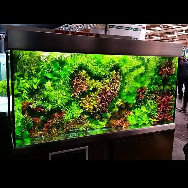 background planted aquarium heart