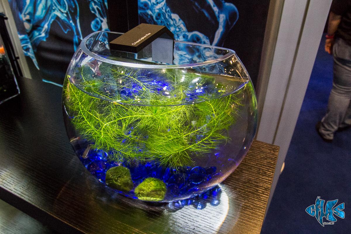 Cobalt Aquatics DECORIA Hemisphere