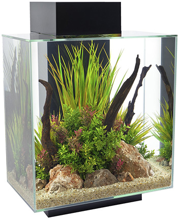 350-fluval-edge-12-gallon