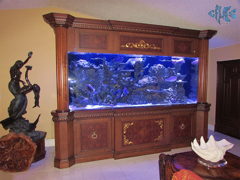 An aquarium fit for a king cflas Beautiful aquariums for home