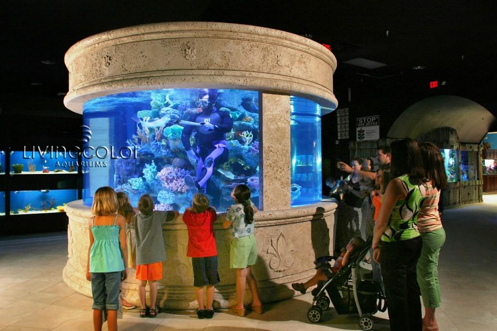living colours aquarium