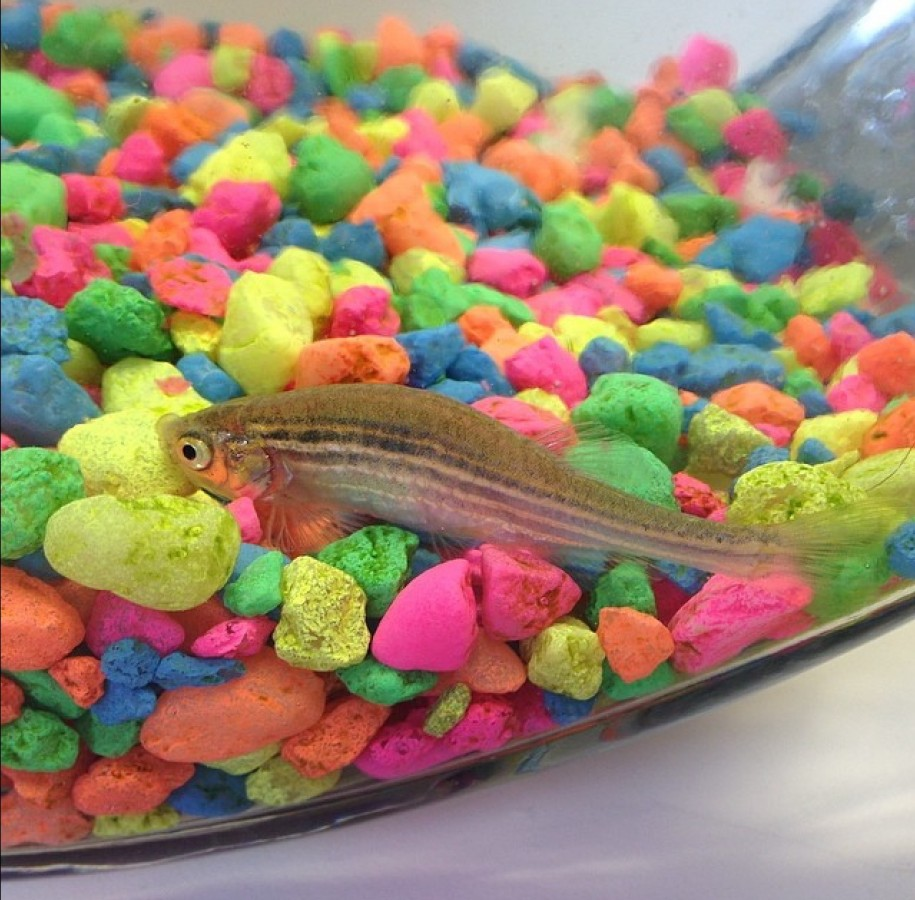 My beloved fish I had for 6 1/2 years, Peeping Tom. Aptly named because he lived in my bathroom. Livin' his life watching people poop and shower. One day his bowl was moved out of the sunlight by my father despite specific instructions to keep his bowl in light. And I came home from work the next day to find my wonderful aquatic companion dead. So, since he was such a valiant creature I decided he deserved a Viking funeral. Here it is...
