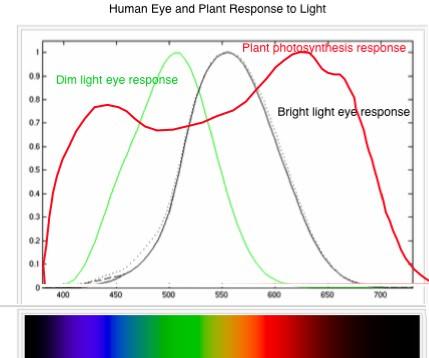 PlantLightResponse-1