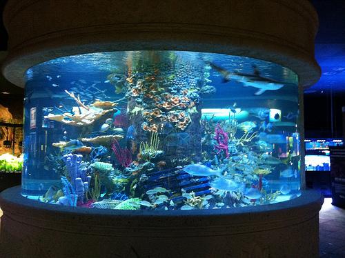 all-fish-2.jpg