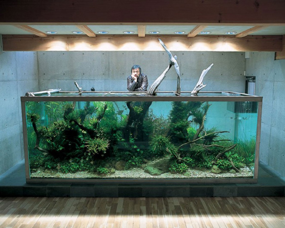 """Nature Aquarium"" by Takashi Amano"